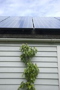 Sunpower, solar, close up