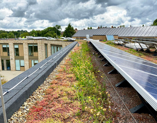 Noah's Ark, green roof, biodiversity